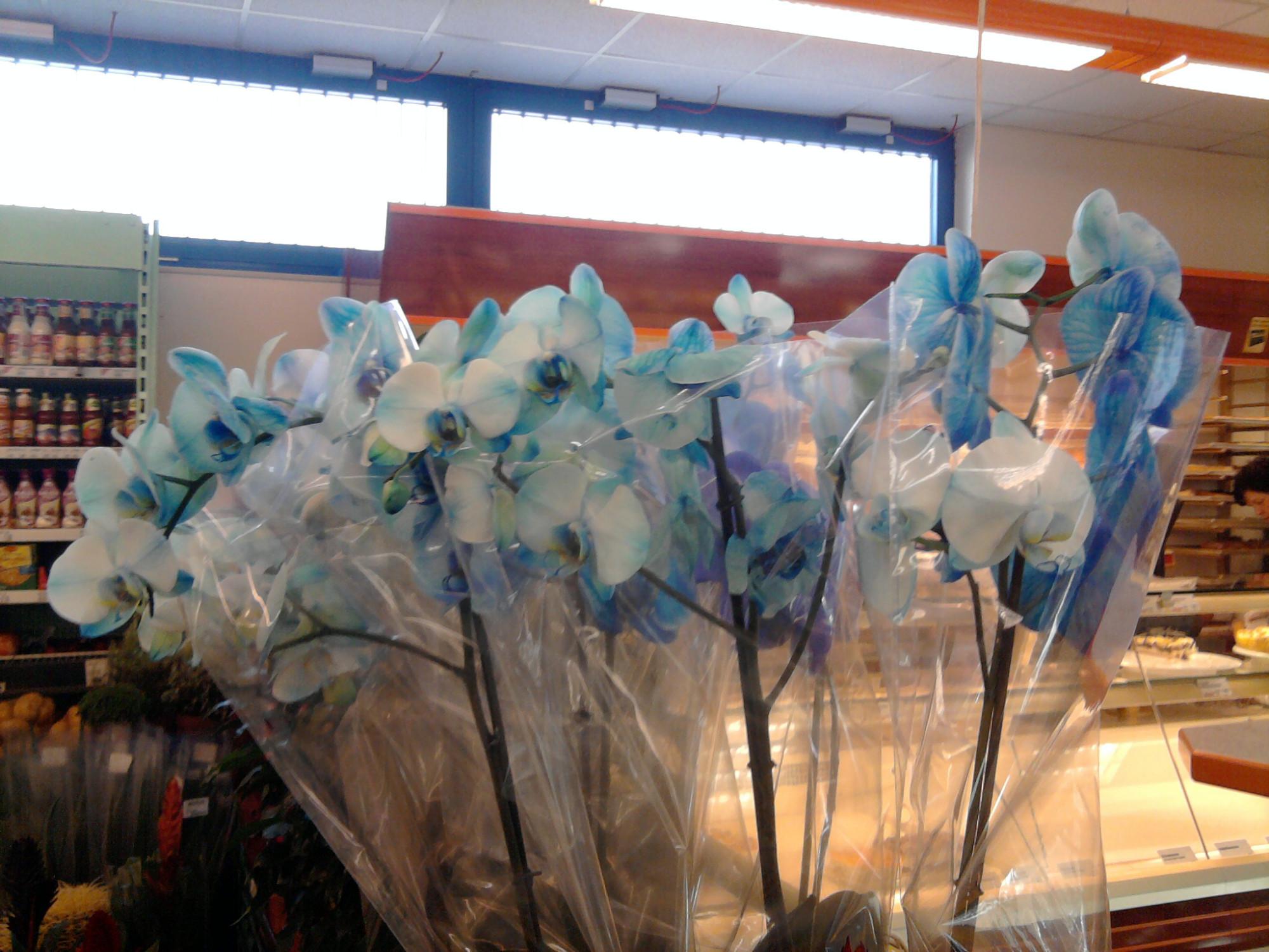blaue orchideen ich glaube alles was einen nicht t tet macht einen komischer. Black Bedroom Furniture Sets. Home Design Ideas